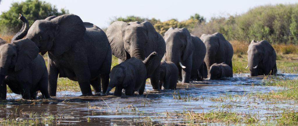 La famiglia di Elefanti Disney +