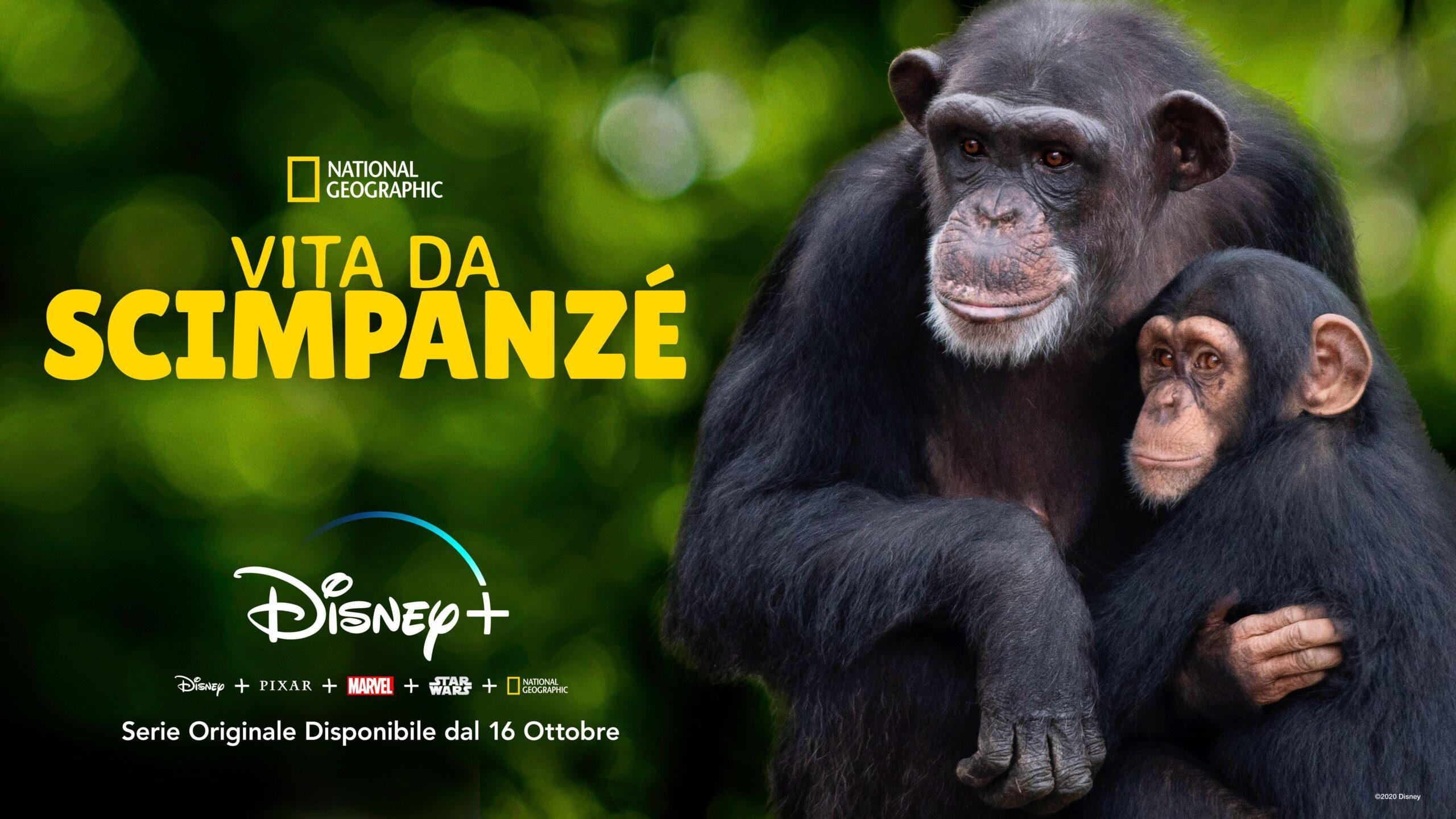 """""""Vita da scimpanzé"""": Disney+ rilascia  trailer e poster ufficiale"""